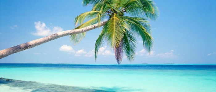 Fiji beach and palm tree